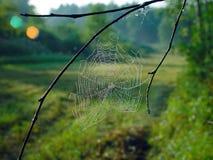 Toile d'araignee. Images libres de droits