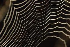 Toile d'araignee perlée Photo libre de droits