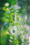 Toile d'araignee verte photographie stock libre de droits