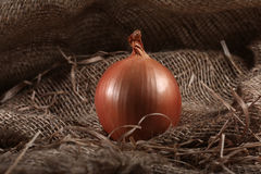 Toile de jute de ferme d'oignon Photos stock