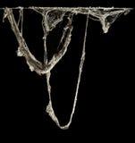 Toile de toile d'araignée ou d'araignée dans la maison thaïlandaise antique d'isolement sur le fond noir Image libre de droits
