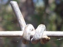 Toile et fil d'araignée photo libre de droits
