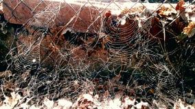 Toiles d'araignée Image stock