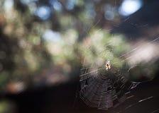 Toiles d'araignée avec l'araignée dans le jardin en été Photographie stock libre de droits
