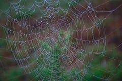 Toiles d'araignée dans la rosée photo stock