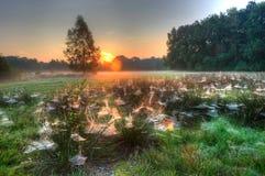 Toiles d'araignée entre l'herbe Photo libre de droits