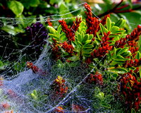 Toiles d'araignée et couleur Images libres de droits