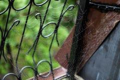 Toiles d'araignée sous la pluie d'été photographie stock
