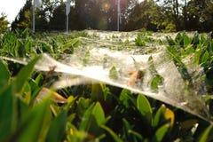 Toiles d'araignée sur les lames en stationnement Images stock