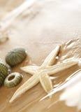 étoiles de mer d'echinus Image libre de droits