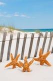 Étoiles de mer en vacances Photographie stock libre de droits