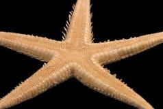 Étoiles de mer sur le noir Image libre de droits