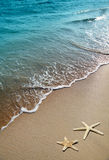 Étoiles de mer sur un sable de plage Images libres de droits
