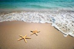 Étoiles de mer sur une plage Photos stock