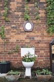 Toilet Garden planter against a brick wall. With a toilet mirror royalty free stock photo