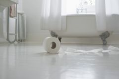 Toilet Paper On Bathroom Floor Royalty Free Stock Images