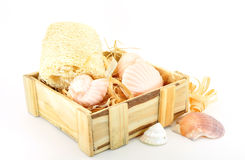 Toiletries in box. Soap and loofah in box with shells isolated on white Stock Images