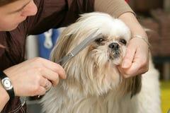 Toilettage de chien Photos libres de droits