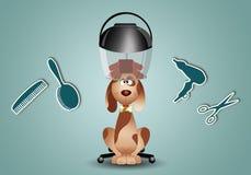 Toilettage de chien Photographie stock libre de droits
