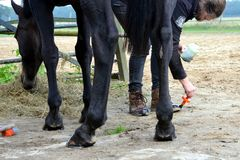 Toilettage de son cheval Photo stock
