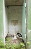 Toilette abbandonata Fotografie Stock Libere da Diritti