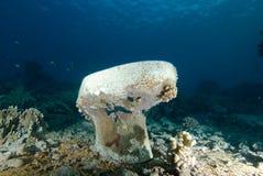 Toilette avec l'accroissement de corail Images stock