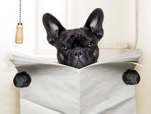 Toilette de chien Image libre de droits