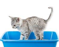 Toilette del gatto Fotografia Stock Libera da Diritti