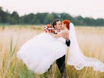 Toilettez porter et embrasser sa jeune mariée dans le domaine de blé ensoleillé Photos libres de droits