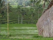 Toit en terrasse et couvert de chaume de riz d'un hangar dans Bali, IndonesiaPhoto pris en août 2018 dans un domaine de riz au-de photographie stock libre de droits