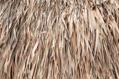 Toit fait de palmettes, texture de fond Image libre de droits