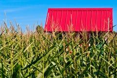 Toit rouge dans un domaine de maïs Image stock