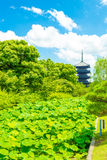 Toji Five Story Pagoda Tower Lilypad Garden Far Royalty Free Stock Image