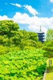 Toji Five Story Pagoda Tower Lilypad Garden Far Royalty Free Stock Image