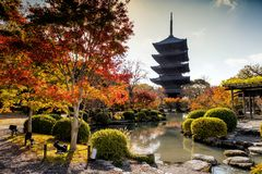 Toji temple in autumn, Kyoto. Toji wooden Pagoda with colorful autumn foliage leaf and reflection on pond at fall season in Kyoto, Japan. Antique Kansai Stock Photo