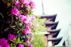 Toji Temple pagoda tower in Kyoto Royalty Free Stock Photography