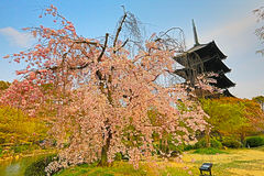 Toji temple in spring, kyoto, japan Stock Images