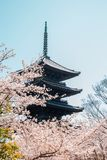 Toji temple traditional pagoda with cherry blossom in Kyoto, Japan stock photography