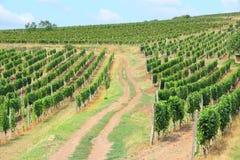 Región del vino de Tokaj Imagen de archivo libre de regalías