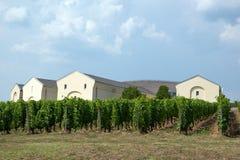 Tokaj vingård Arkivbild