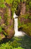 Tokatee cai Oregon Imagem de Stock Royalty Free