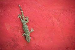 Tokay Gecko Lizenzfreies Stockfoto