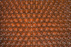 Tokay wine bottle shelving. In wine-cellar horizontal Stock Images