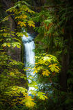 Toketee Falls Douglas County Oregon Royalty Free Stock Photo