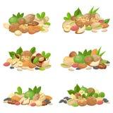 Tokig grupp Fruktkärnor, torkad mandelmutter och laga mat den frö isolerade vektoruppsättningen vektor illustrationer