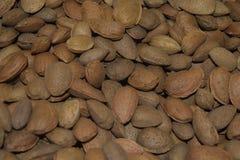 Tokiga mandlar i massa Det är många mandlar Royaltyfria Foton