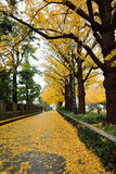 Tokio Ginkgo Złota ulica Zdjęcie Royalty Free