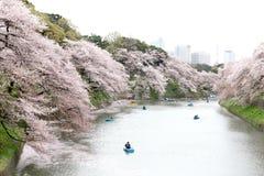 Tokio, Japón - 4 de abril: Una gente no identificada se relaja en cereza Fotos de archivo