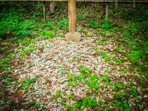 Tokio, Japón - 24 de agosto de 2017: Ciérrese para arriba de pequeños pedazos de corazón de madera en la tierra, en el parque de  Imagenes de archivo