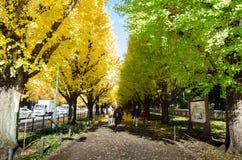 Tokio, Japón - 26 de noviembre de 2013: Avenida del árbol del Ginkgo de la visita de la gente que dirige abajo a Meiji Memorial P Imagenes de archivo